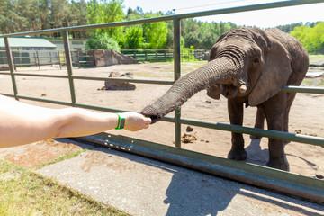 a human hand touches an elephant trunk