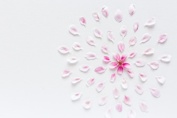 top view on round pattern of sacura flowers laying on white background. Concept of love and spring. Dof on sacura flowers. Flat lay.