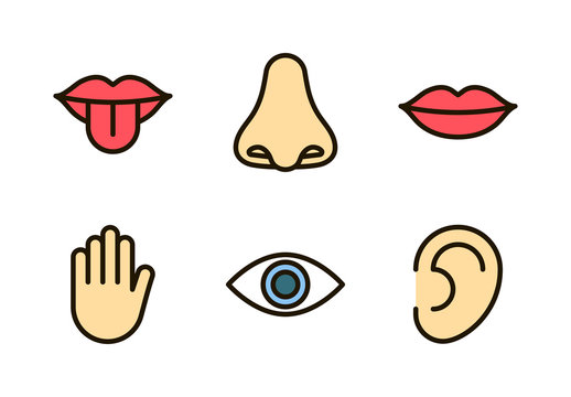 Outline color icon set of five human senses: vision (eye), smell (nose), hearing (ear), touch (hand), taste (mouth with tongue). Simple line icons. Editable stroke. Vector illustration, eps10.