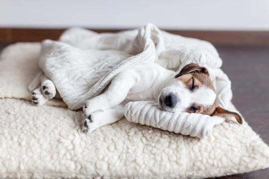 Sleeping puppy on dog bed