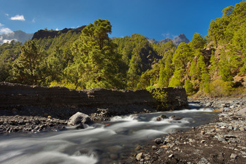 Forest with a mountain river in caldera of Taburiente, island of La Palma, Canary Islands