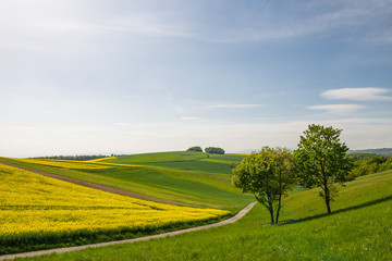 Hügelige Landschaft mit Rapsfeld