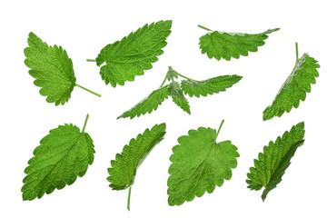 Melissa leaf or lemon balm isolated on white background. Top view. Flat lay pattern