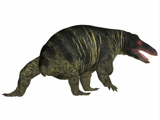 Jonkeria Dinosaur Tail - Jonkeria truculenta was an omnivorous therapsid dinosaur that lived in South Africa during the Permian Period.