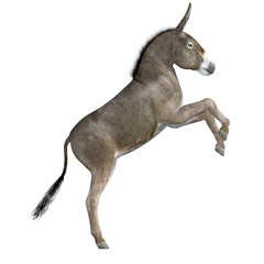 Donkey isolated on white, 3d render.