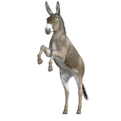 Donkey isolated on white, 3d render.