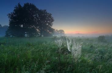White spider web in summer morning landscape