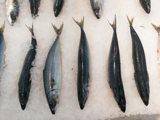 Fresh mackerels on ice cubes.