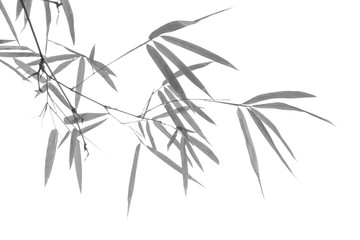Bamboo leaf in black and white tone..
