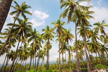 Palm plantation