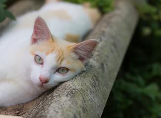 cute kitty is lying on floor