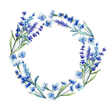 Blue lavender. Floral botanical flower.Wild spring leaf wildflower frame in a watercolor style. Aquarelle wildflower for background, texture, wrapper pattern, frame or border.