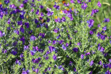 Flowers spring, orange and purple