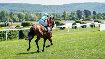 Race horses with jockeys on the home straight.