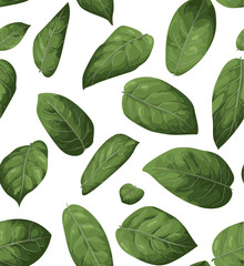 Vector seamless pattern background . Illustration greenery design: Lemon Leaf, Salal (Gaultheria shallon)  All elements are isolated