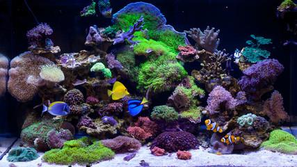 Keuken foto achterwand Koraalriffen Home Coral reef aquarium