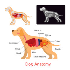 Dog Anatomy, Internal Organs, Skeleton, X-Ray