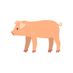 Cute cartoon little pig standing, side view vector Illustration on a white background