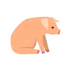 Little funny pig sitting on the floor, side view cartoon vector Illustration on a white background