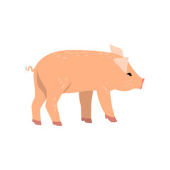 Little funny pig, side view cartoon vector Illustration on a white background