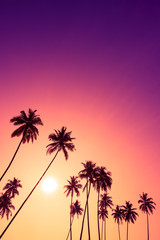 Beautiful vivid tropical sunset with palm trees silhouettes and sky as copy space place