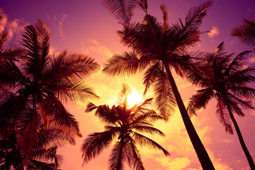 Tropical sunset beach vivid sky and palm tree silhouettes