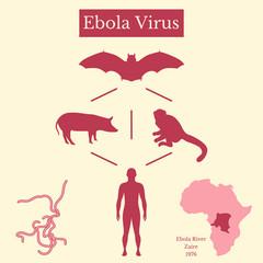 Ebola Virus. Infographics Source of disease