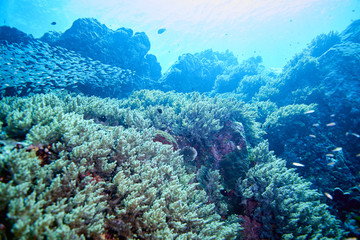 Fish on underwater coral reef