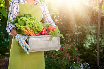Unrecognisable female farmer holding crate full of freshly harvested vegetables in her garden. Homegrown bio produce concept.