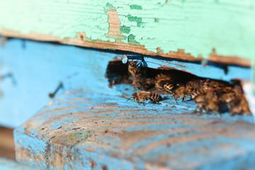 пчела собирает мёд на природе в горах