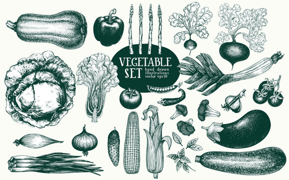 Vegetables hand drawn vector illustration set. Retro engraved style illustrations. Can be use for menu, label, packaging, farm market products.