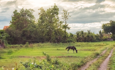 lovely romantic picture of horse grazing in a meadow in thailand