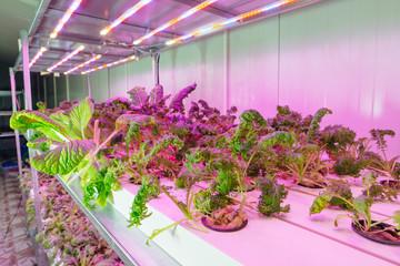 Hydroponics agricultural farm