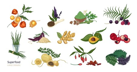 Collection of elegant botanical drawings of superfoods isolated on white background. Fruits, berries, seeds, root crops, leaves and powder. Natural healthy and wholesome food. Vector illustration.