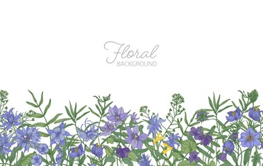 Beautiful horizontal floral backdrop decorated with blue and purple wild meadow blooming flowers growing at bottom edge on white background. Elegant hand drawn botanical vector illustration.