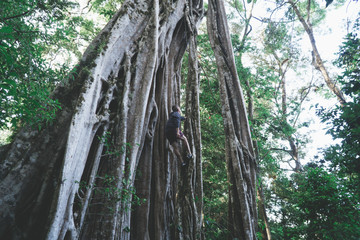 Strangler Ficus Climb
