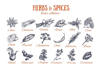 Herbs and Spices condiments 4