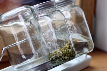 Sprossen im Glas