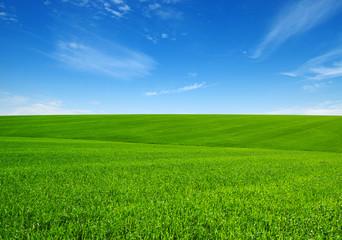 Wall Mural - Green grass field