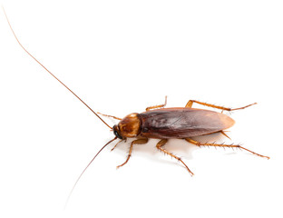 Close up of single cockroach.