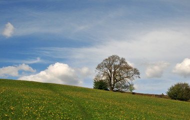pathway winding up beautiful flower covered hillside pasture with a single tree and a dramatic cloudscape in a sunlit blue sky in west yorkshire england in spring