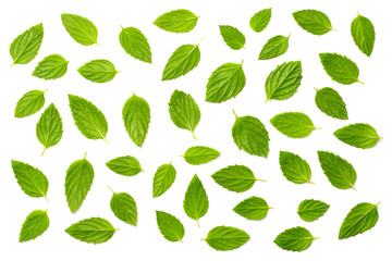 collection of fresh peppermint leaves isolated on white, top view