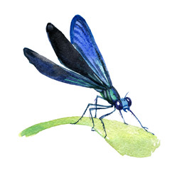 Dragonfly isolated on white background, watercolor illustration