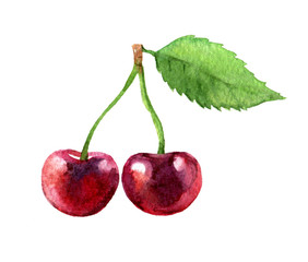 Cherry isolated on white background, watercolor illustration