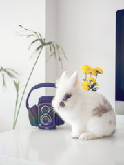 Rabbit sitting on table in room