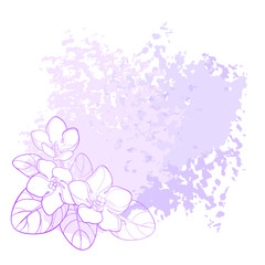 Vector corner bouquet with outline Saintpaulia or African violet flower and leaf in purple on the pastel textured background. Viola flower in contour for indoor floriculture and summer design.