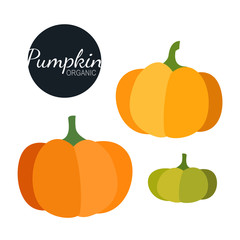 Fresh organic pumpkin isolated on white background. Flat style