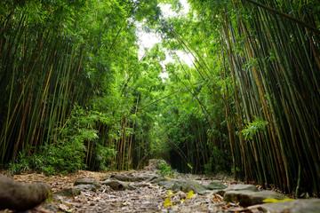 Photo sur Plexiglas Bamboo Path through dense bamboo forest, leading to famous Waimoku Falls. Popular Pipiwai trail in Haleakala National Park on Maui, Hawaii