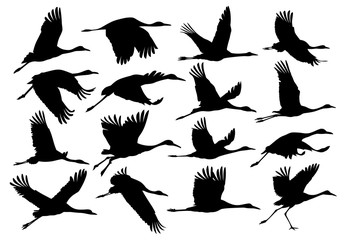 Silhouettes of cranes.