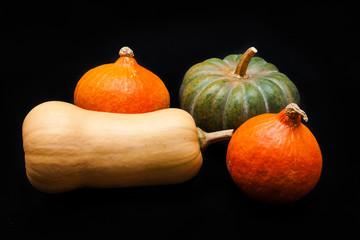Colorful pumpkin and squash, Red Kuri, Kabocha, Butternut
